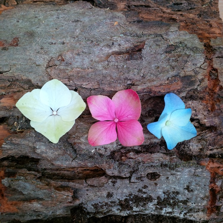 hydrangea petals on bark