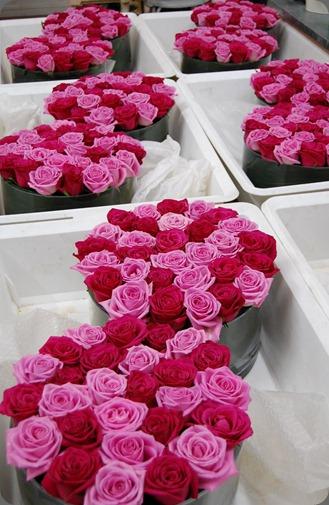 100_1461 mood flowers