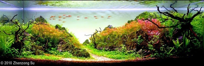 aquascaping-17