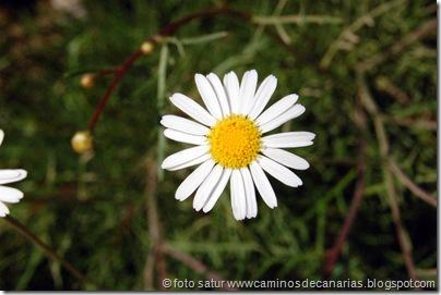 1088 Arteara-S.Fernando(Magarza Maspalomas)