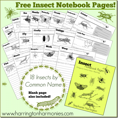 FREE Insect Notebook Pages #writing #science #homeschool #education