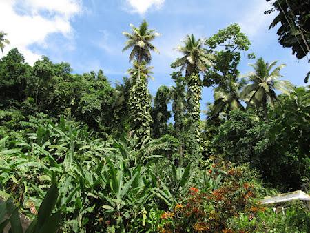 26. gradina botanica.jpg