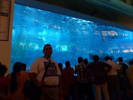 Obiective turistice Dubai: Acvariul din Dubai Mall