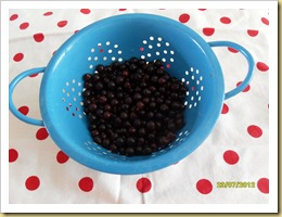 Blackcurrant yield 1cup 2012