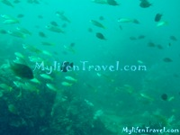 Koh Lipe Diving 63
