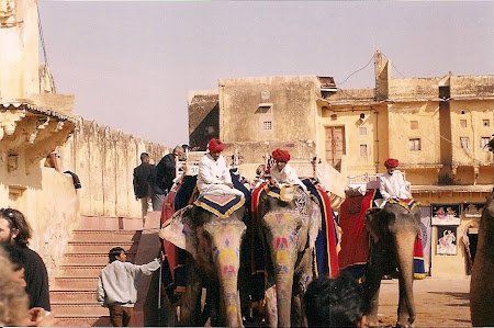 Obiective turistice India: elefanti la Amber Fort Jaipur
