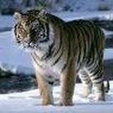 imagesCADDA9V4.jpg