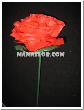 mamaflor-3089