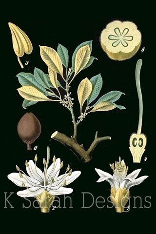 Botanical prints on Etsy: K. Sarah Designs