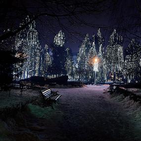 Winter Story by Bogdan Negoita - City,  Street & Park  City Parks ( winter story )