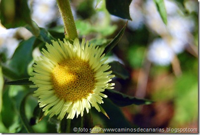 1048 Cascajales-L.Magullo(Estrellada espinosa-Malpica)