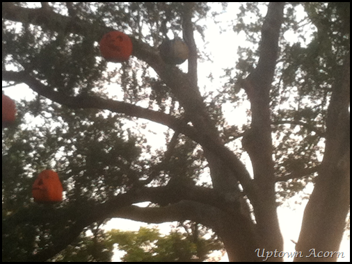 pumpkins in tree 3