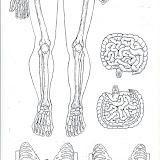 Esqueleto-2BN.jpg