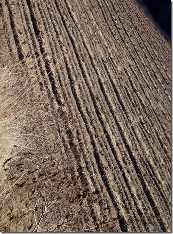 secano campo arado