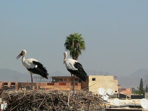 Imagini Marrakech: palatul Badi berze