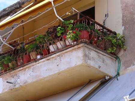 22. Flori in balcon.JPG