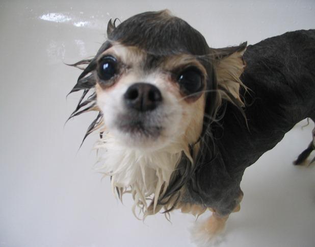Banho canino.