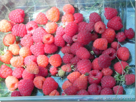 raspberry-picking-2