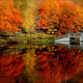 Colourful by David W Hubbs - Landscapes Forests ( autumn leaves, waterscape, autumn, mirrored, autumn colors,  )