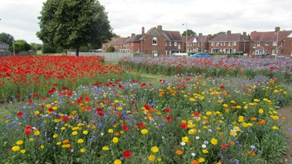 Gloucester  displays of Euroflor Flanders poppies with Alliance and Hope flower mixes. www.rigbytaylor.com1