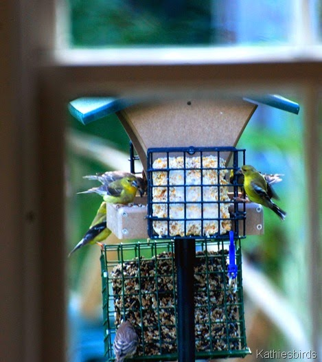 9. birds at feeder-kab