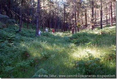 8154 Volcán Hondo Fagajesto(Hoya de los Helechos)