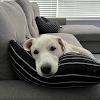 Rand Nguyen