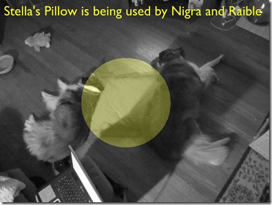 stella's pillow being used by nigra and raible