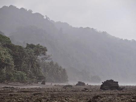 40, Ceata in jungla.JPG