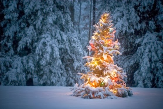 christmas-tree-in-snow (1)