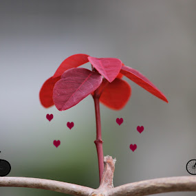 Love in the Air by Arjun Madhav - Digital Art Things ( love, hearts, nature, digital art, art, artistic, air, leaf, romance,  )