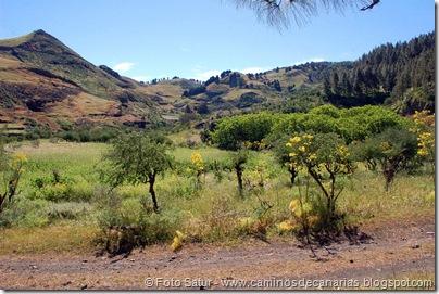8164 Volcán Hondo Fagajesto(Llano Galeote)