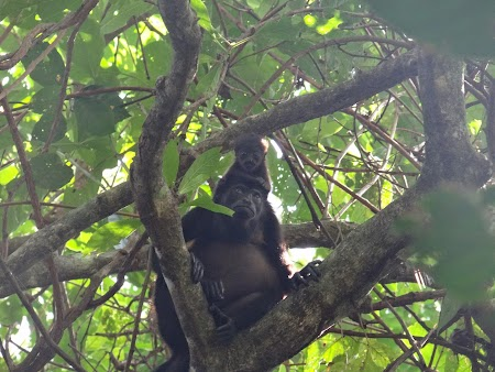 30. Maimuta cu pui.JPG