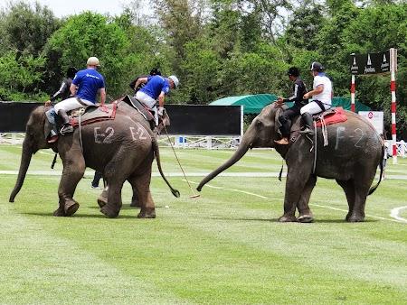 13. Polo pe elefanti.JPG
