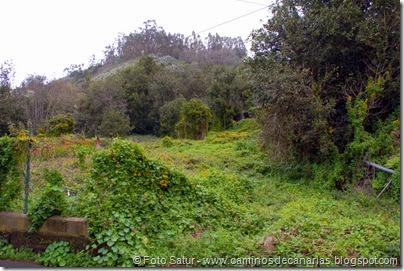 7342 La Laguna-Barranco Laurel(Barranco Monagas)