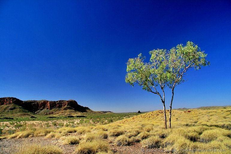 Purnululu bungle bungle rock tree outback scenery