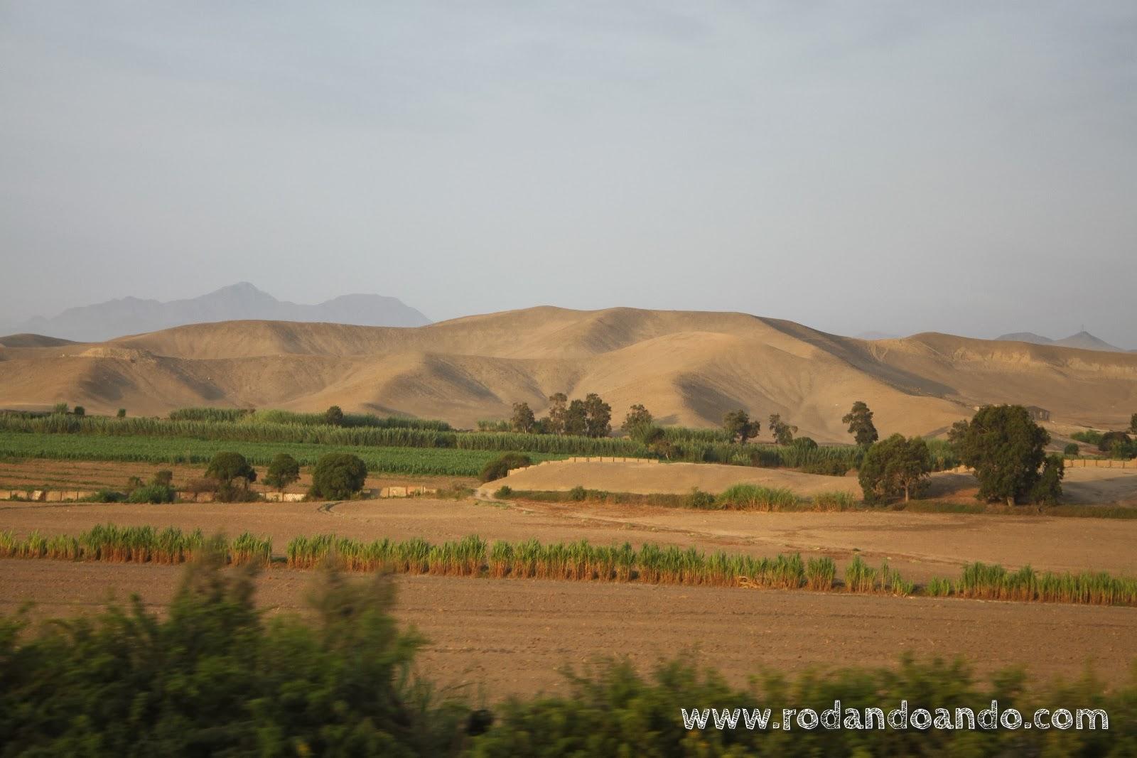 Desierto y cosecha