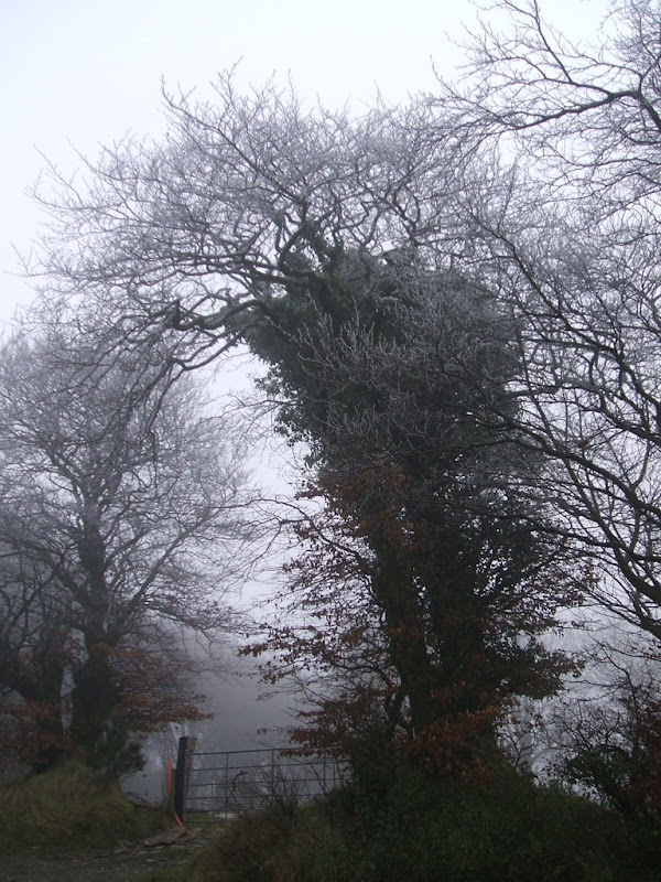 Tree frosted-Brianan Nolan.JPG