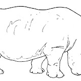 animales salvajes 11.jpg
