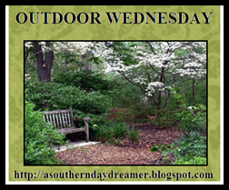 Outdoor Wednesday button_thumb[1]