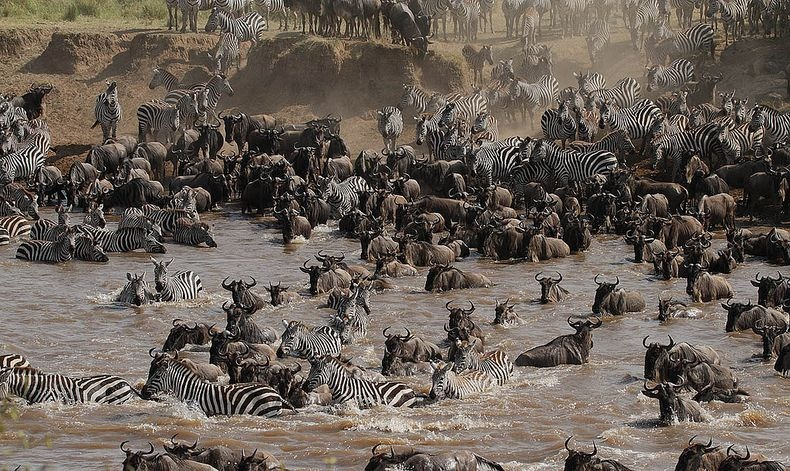 mara-river-crossing-9