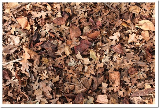 120102_brown_leaf_litter