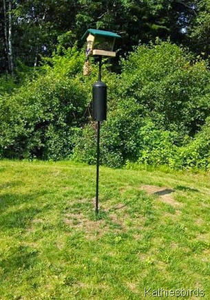 7-18-14 bird feeder pole