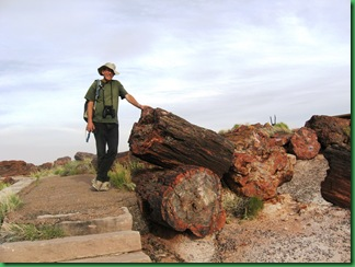 Painted Desert & Petrified Forest 376