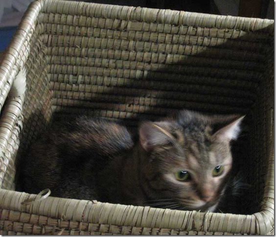 kitty-in-the-box-1498