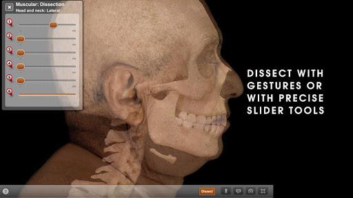 Anatomy Physiology REVEALED