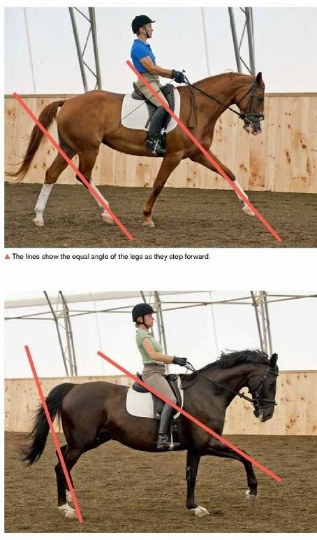 Extended Trot Correct vs Incorrect