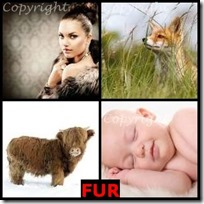 FUR- 4 Pics 1 Word Answers 3 Letters