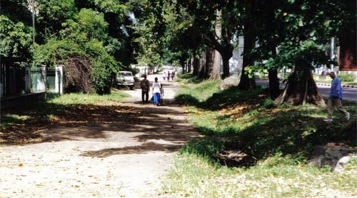 Trotoir du boulevard du 30 juin avant coupe d'arbres