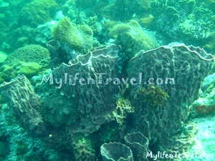 Koh Lipe Diving 80